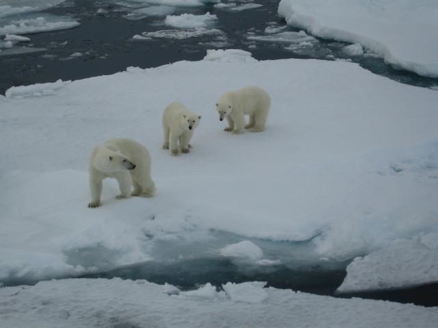 Resa 2008 25 aug-4 sept  Svalbard Runt 11 dgr 167